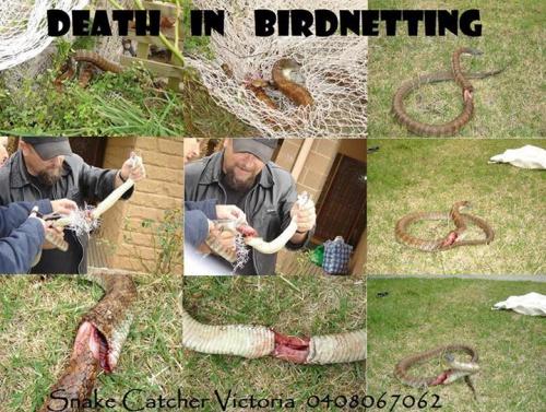 death in birdnetting