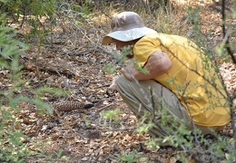 Jeff & Gila monster (Heloderma suspectum)